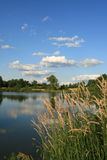 Summer Evening. Osprey Lake on a beautiful summer evening with blue sky and puffy clouds, with wispy grass in foreground (Onsted, MI stock photos