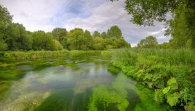 Summer evening golden light on the River Itchen - full of Water Crowfoot (Ranunculus aquatilis) and a well known chalk stream fly. Fishing river - near Martyr royalty free stock photo