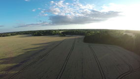 Summer evening landscape with crop fields aerial view from drone stock footage
