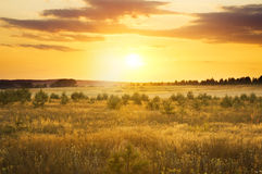 Summer evening  landscape Stock Images