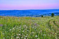 Summer evening landscape over hills and flowering meadow royalty free stock photography