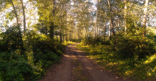 Summer evening panorama in park Stock Image