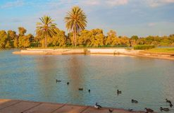 Summer evening in the park Royalty Free Stock Images
