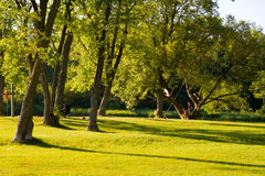 Summer evening in a park. Trees with shadows in a park royalty free stock images