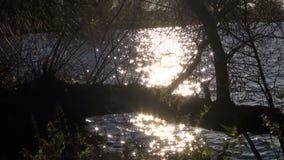 Summer evening sunlight sparkling shining  on lake water stock footage