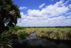 Summer in the Everglades Royalty Free Stock Photography
