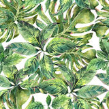 Summer exotic watercolor seamless pattern Stock Image