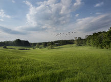 Summer Farm Field in the Hudson Valley Royalty Free Stock Photos
