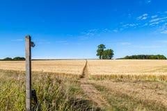 A Summer Farm Landscape royalty free stock photos