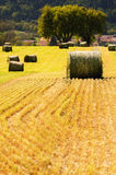 Summer farm scenery with haystacks in the field Royalty Free Stock Images