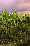 Summer farmland Stock Photos