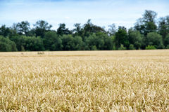 Summer farmland Stock Photos