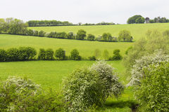 Summer farms, meadows on a hill in Cotswolds Royalty Free Stock Photography