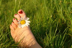 Summer feeling. Concept displaying a foot with a daisy between the toes Royalty Free Stock Photos