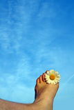 Summer feeling. Concept displaying a foot with a daisy between the toes Royalty Free Stock Image
