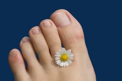 Summer feet toes. Summer feet with a flower royalty free stock photos