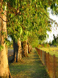 Summer Fence Line. A fence line and some beautiful trees Royalty Free Stock Photography