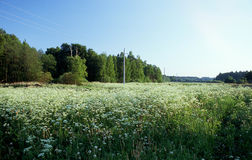 Summer field. Summer evening Royalty Free Stock Images