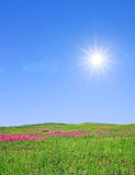 Summer field Stock Photography