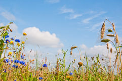 Summer in the field. A framework of colorful wildflowers in the sunny field against a blue sky Stock Photos