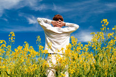 In summer field Royalty Free Stock Images