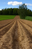 Summer field. Fresh plough field in country Royalty Free Stock Image