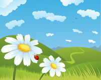 Summer field. With white daisies Royalty Free Stock Image