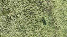 Summer field aerial view. Clip stock video