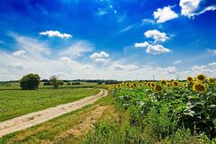 Summer field against the blue sky. Beautiful landscape. Nature stock photo