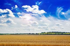Summer field against the blue sky. Royalty Free Stock Images