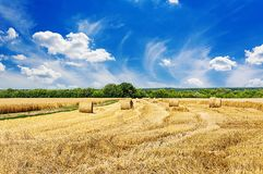 Summer field against the blue sky. Beautiful landscape. Stock Images