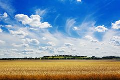 Summer field against the blue sky. Beautiful landscape. Nature royalty free stock photos