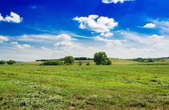 Summer field against the blue sky. Royalty Free Stock Photo