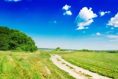 Summer field against the blue sky. Royalty Free Stock Photos