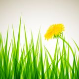 Summer field, background Royalty Free Stock Photography