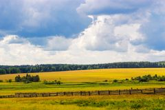 Summer field Royalty Free Stock Images