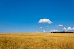 Summer field Stock Photography