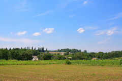 Summer field and blue sky. Summer landscape with yellow field and blue sky Royalty Free Stock Photos