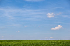summer field with blue sky over it Royalty Free Stock Images