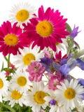 Summer Field bouquet Stock Photos