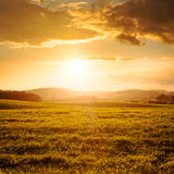 Summer Field and Clouds in Golden Light of Sunset Royalty Free Stock Images