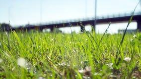 Summer Field stock footage