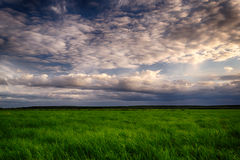 Summer field and dramatic sky before storm. Stock Photos