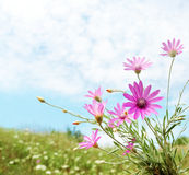 Summer field flowers Stock Photography