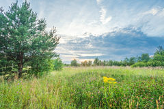 Summer field with flowers. Nature background Royalty Free Stock Photo