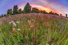 Summer field with flowers. Coloful sunset in summer field with flowers. Fish-eye look Stock Photos
