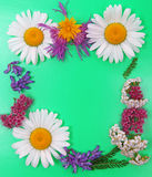 Summer field flowers on green background as floral background Royalty Free Stock Images