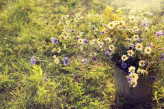 Summer field flowers Royalty Free Stock Images