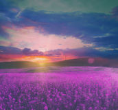 Summer field with flowers. At magnificent sunset. soft focus vintage colored natural background royalty free stock image