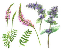 Summer Field Flowers Set. Hand drawn floral set. Watercolor pink and lilac wild flowers isolated on white background. Summer wildflowers aquarelle sketch Stock Images